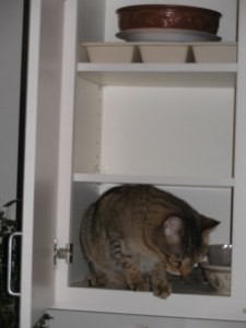 cat-in-cabinet2