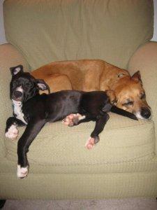 Her pups